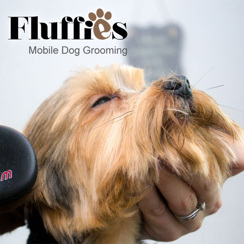 Mobile Dog Grooming Service covering Stoke on Trent, Leek and surrounding areas of Staffordshire. We visit your furry friend at home to cut and style.