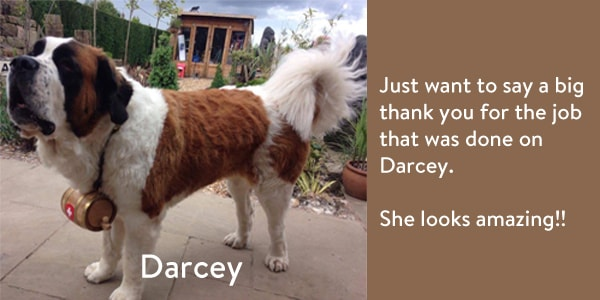 Darcey-review-min