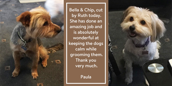 Bella-Chip-review